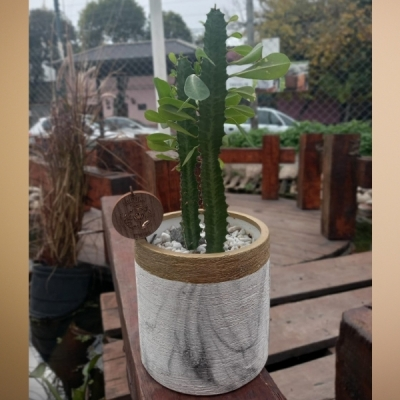 Cáctus Euphorbia En Maceta Deco Efecto Mármol